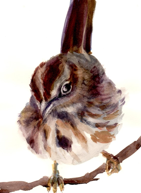 Song Sparrow signed print by Bonnie White