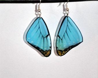 Handcrafted Butterfly Wing Earrings, Blue Morpho earrings, Jewelry, Fish Hooks, 14k Gold, Hypoallergenic, Sterling Silver, Clear wings