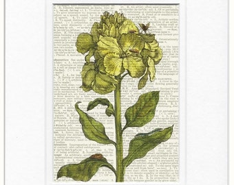 1600's botanical XIV print