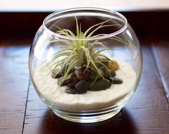 Air Plant Terrarium, Glass Terrarium, Minimalistic Terrarium, Gift for Him, Terrarium, Birthday Gift, Terrarium Desk Warming Gift, Airplants