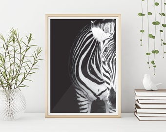 Zebra Illustration Downloadable Artwork Black and White A4 and A3