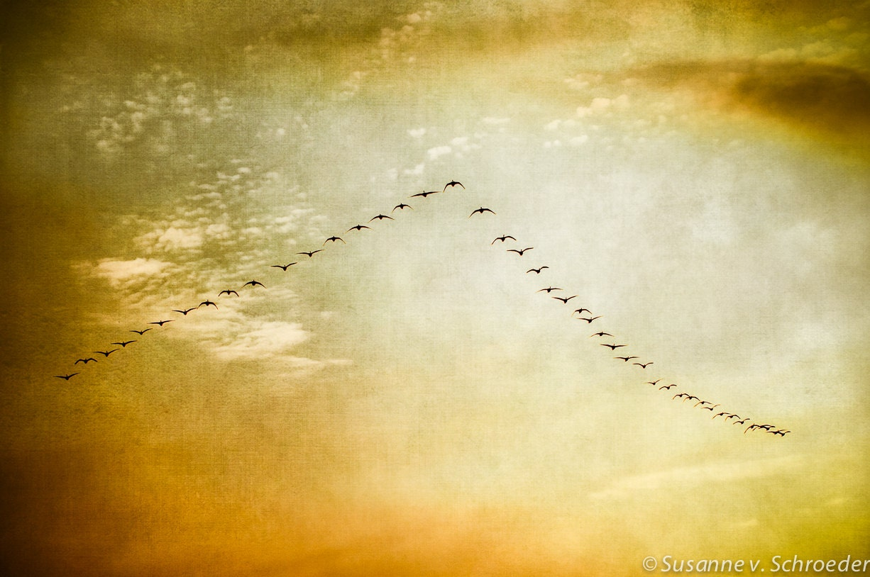 Geese in Sky Nature Photography Birds Flight V-Formation