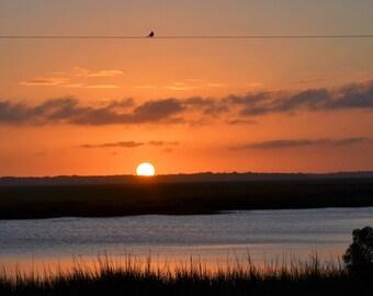 Nature Photography - Bird On A Wire - Coastal, Sunset, Marsh, Bird, Landscape, Gift, Skyline, Southern, Beach, Sea, Fine Art Photography