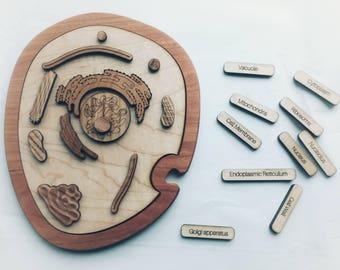 Animal cell model, wooden cell model