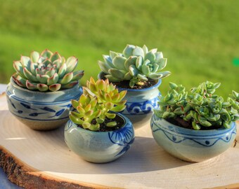 Cute small blue and white porcelain succulent and flower planter with drain hole