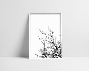 Tree Branches Print White Background Black Tree Print Digital Download Minimalist Photo Tree Photography Minimal Home Decor Tree Wall Art