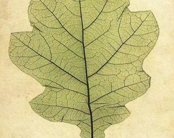 """Vintage Botanical Print """"Oak Leaf"""" Woodland Print - Green Chartreuse Leaf Illustration - Oak Tree Forest"""