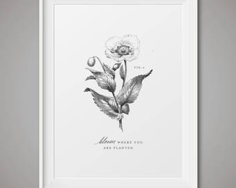 Botanical art prints - Fig 3