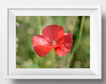 Red Poppy Print, Printable Wall Art, Red and Green Decor, Flower Lover Gifts, Photos of Red Poppies,  Living Room Decor, Flower Photography