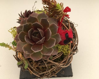 Succulent grapevine planter with red cardinal