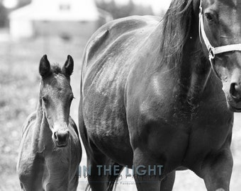 Colt and his mom - fine art photography