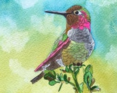 Anna's Hummingbird Wa...