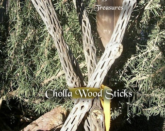 "Cholla Wood ~16""-22""~ Cholla Cactus Sticks ~ Skeleton Cactus ~ Southwest Rustic Decor ~ Organic Terrarium Perch ~ Wands Handles"