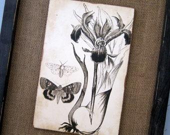 Botanical Art Print Iris Print Flower Nature Sepia Vintage Inspired Print Cottage Art Rustic Decoupage Art Bulb Art Print Garden Art Print