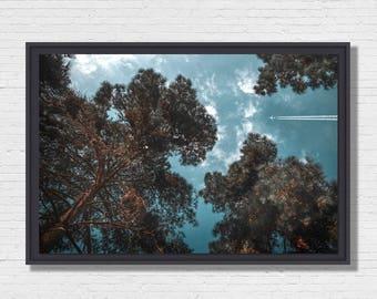 Forest Nap - Photo Art framing floater