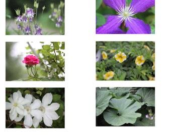 "Photo Print - Set of Ten 2"" x 3"" Floral Cards, Flower Flash Cards, Flower Miniature Photo Prints, Flower Identification"