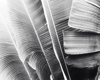 Banana Leaves Print, Black And White Photography, Tropical Leaves Art, Botanical Print, Modern Gray Wall Art  - Lush Leaves