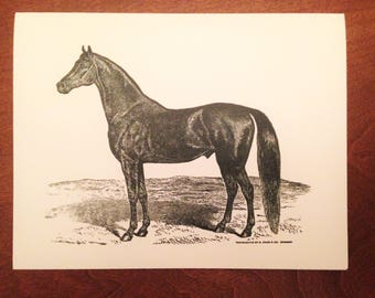 Greeting Card, Horse