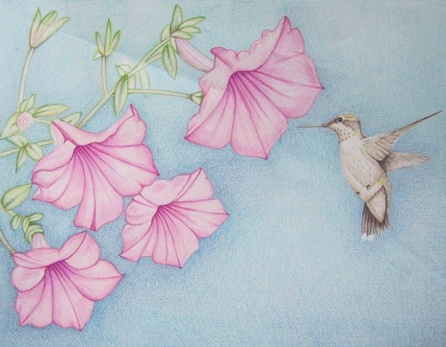 Pencil art work hummingbird with pink flowers original zoom mightylinksfo