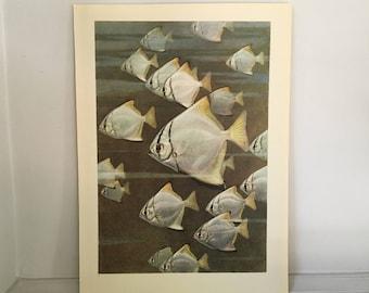 1945 OCEAN LIFE LITHOGRAPH - original vintage print - large size underwater sea life scene print - school or shoal of psettus fish