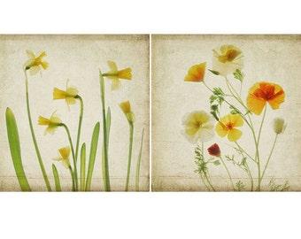 Botanical Print Set, Shabby Chic Wall Decor. Daffodil Print, Poppy Print, Scanned Flowers, Botanical Art, Floral Decor