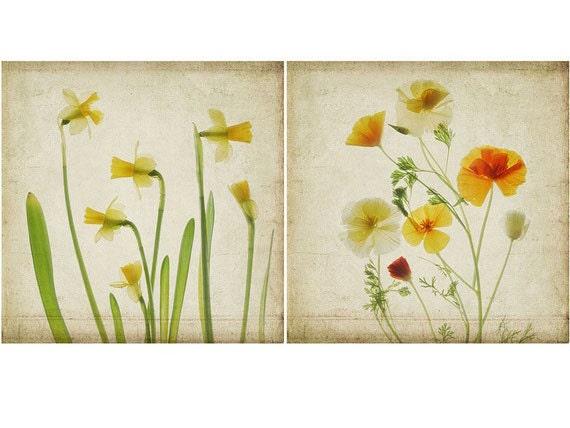 Botanical Print Set Shabby Chic Wall Decor. Daffodil Print