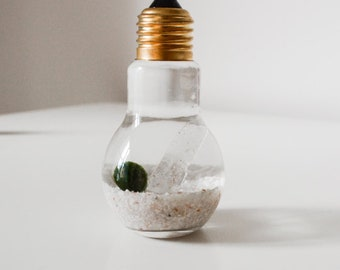 Marimo Terrarium - Light Bulb with Quartz