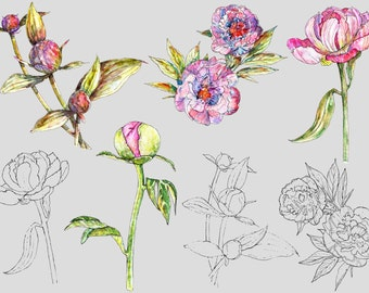 Watercolor Clipart, Digital Clipart, Instant Download, Raster, Vector, Peonies, Peony Flowers, Botanical Illustration, Wedding, Scrapbooking