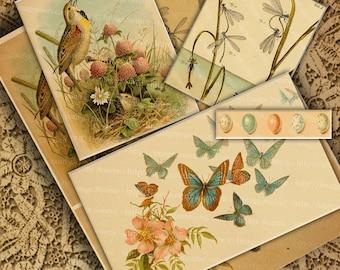 Vintage Springtime Nature Clip Art Digital Collage Sheet Butterflies, Eggs, Dragonflies and a Singing Bird Instant  Download Printables