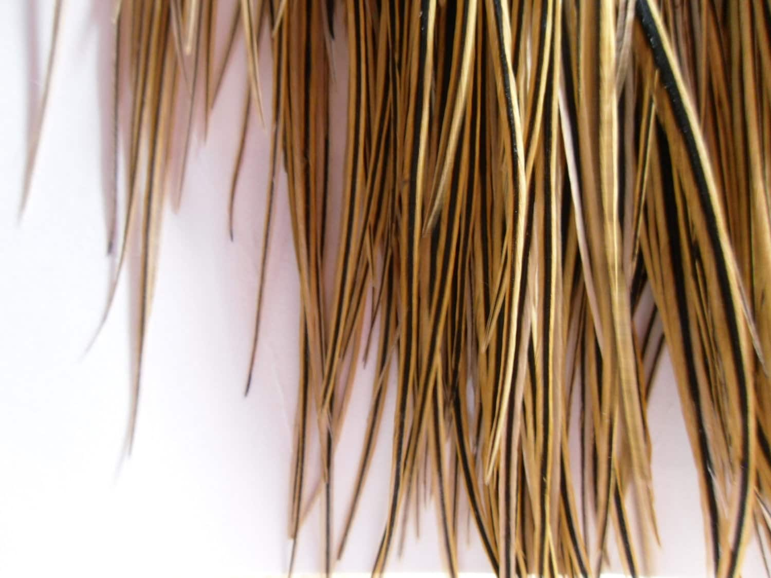 Golden Feather Extensions Hair Supplies Long Feathers For Hair