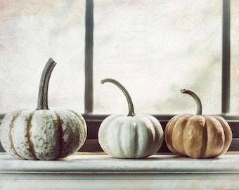 White Pumpkin Print, Stripped Pumpkin, Photograph, Kitchen Wall Art, Farmhouse Decor, Rustic, Fall Decor, Food Photography, Autumn Decor