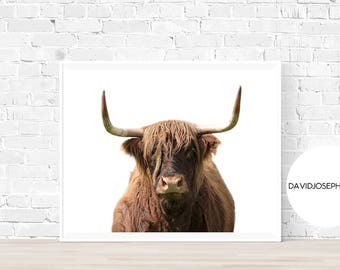 Highland Cow Print, Highland Bull Print, Printable Decor, Farm Wall Art, Cattle Photography, Digital Download, Highland Cow Printable