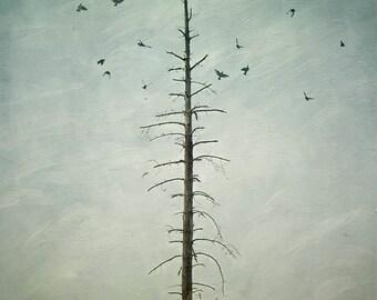 landscape photography tree birds desolate field nature photography conceptual wall decor