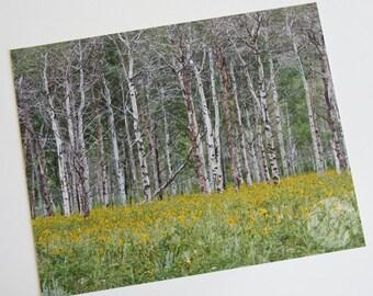 Colorado Aspens - Photographic Print