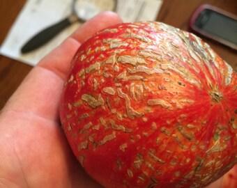 7 German Feurwerks Tomato Seeds-1335