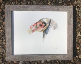 Turkey Vulture -Original Watercolor