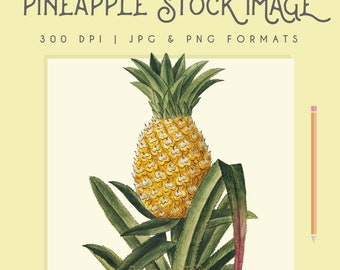 Vintage Pineapple image Instant Download Digital printable picture clipart graphic transfer high resolution logo