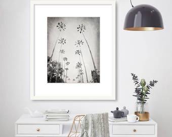 Palm Tree Photography, Black and White, Los Angeles, Beverly Hills, California Photo, Beach, Coastal Decor, teal blue, mint green, Wall Art