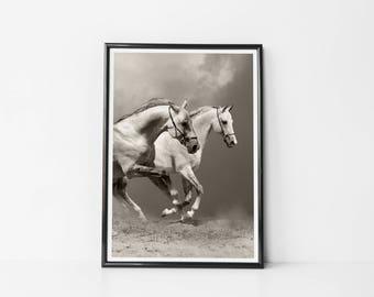 Horse  | Art Prints