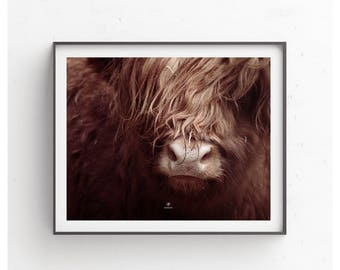 Scottish Highland Cattle, photography, poster, Boho, cow, cattle, nature, Scotland, animal, country style, cowboys, bull, home decor
