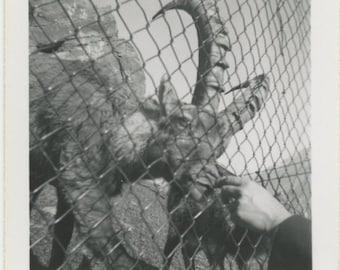 Vintage Snapshot Photo: Zoo [84669]