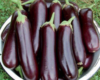 Eggplant Heirloom Variety Diamond Italian Seed Grown To Organic Standards