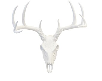 Faux Taxidermy - Flat White Deer Skull- White Home Decor- Wall Mount BS0101