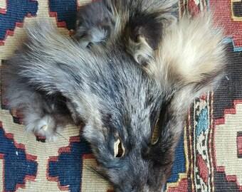Tanned Cross/Silver Fox Face