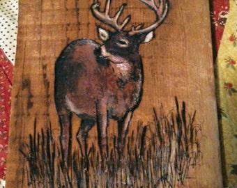 Magnificent Deer
