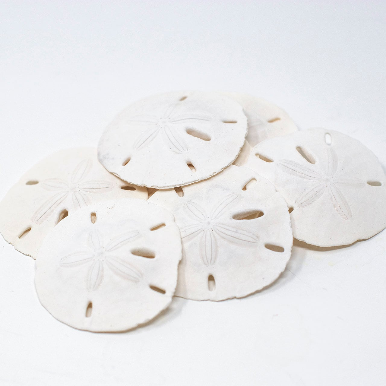 White Natural Sand Dollars - Crafts Wedding Favors Terrariums ...