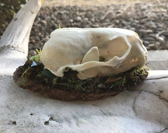 Real Otter and Gemstones Display
