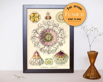 """Vintage Jellyfish illustration from Ernst Haeckel  - framed fine art print, sea creatures,sea life, 8""""x10"""" ; 11""""x14"""", FREE SHIPPING - 293"""