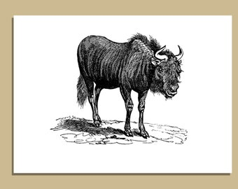 SALE - Set of 10 Bison Notecards With Envelopes - 5 x 7 inches -  Greeting Cards - Fathers Day Gifts - Gift for Him