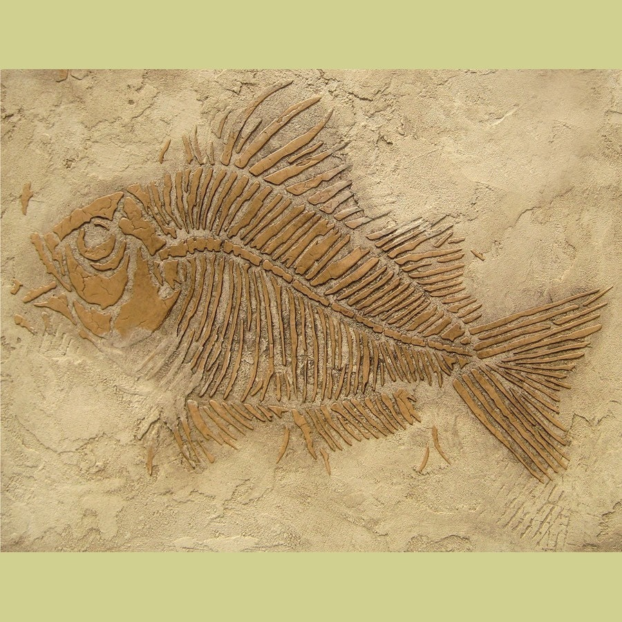 Prehistoric Large Fish Fossil Stencil Raised plaster stencil
